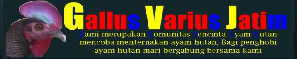 Gallus Varius Jatim