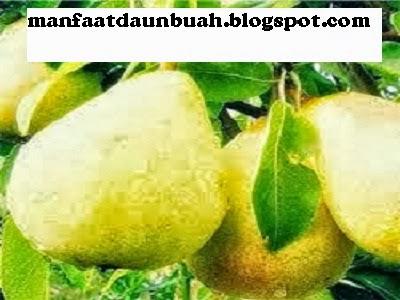 buah pir merupakan salah satu buah yang termasuk dalam keluarga pyrus ...