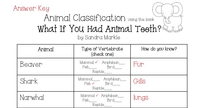 animal worksheet new 424 animal adaptations worksheet middle school. Black Bedroom Furniture Sets. Home Design Ideas