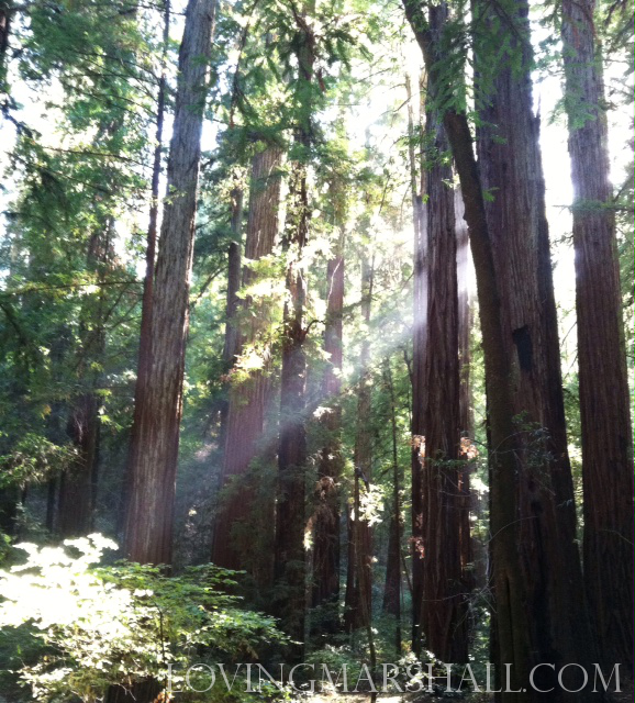 The redwoods.