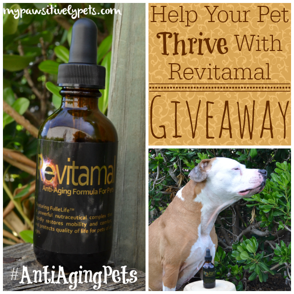 Help your pet thrive with Revitamal - giveaway #AntiAgingPets