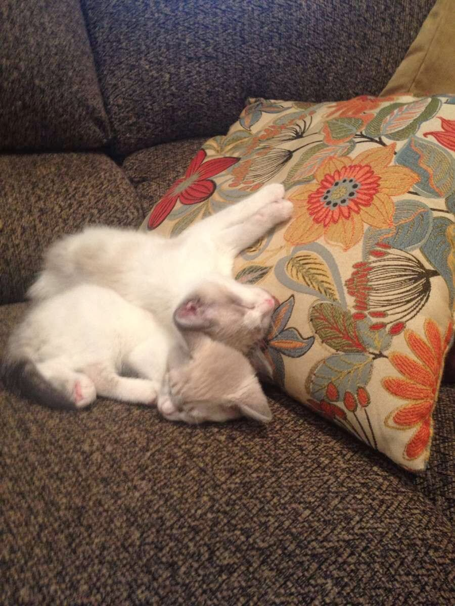 Funny cats - part 76 (35 pics + 10 gifs), cat pics, funny cat, cat and kitten pictures