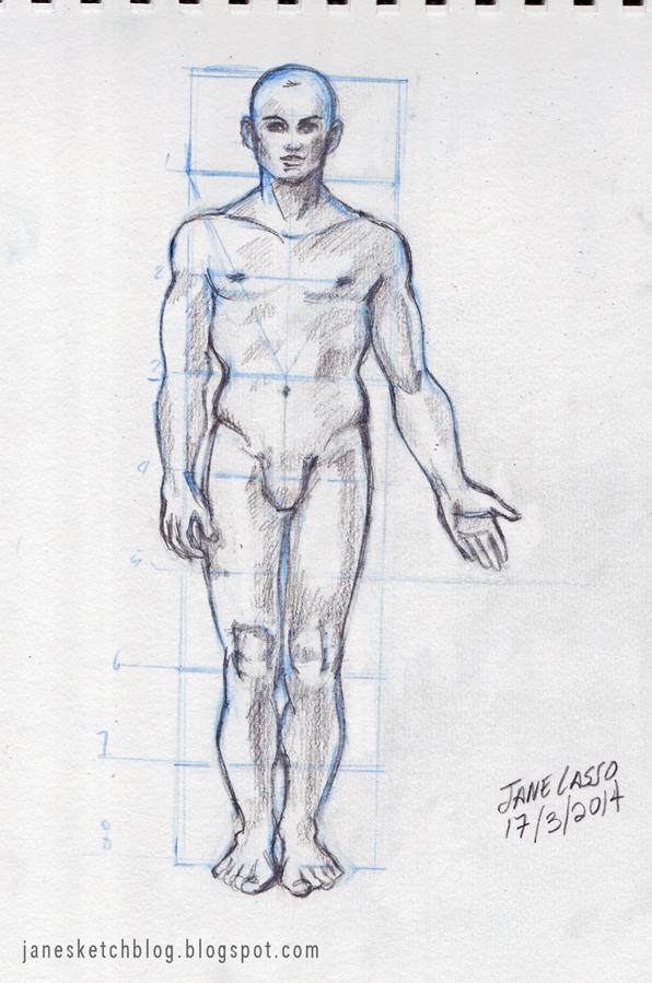 Dibujo de proporción masculina
