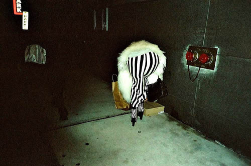 dirty blog - photo stories - Zebra