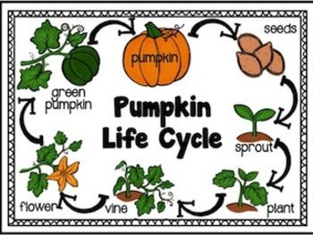 Gorgeous image within life cycle of a pumpkin printable