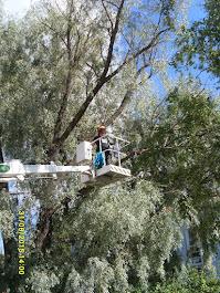 Puunkaato pihoissa ja puutarhoissa pensasaitojen leikkaukset käteisellä kotitalousvähennysoikeus