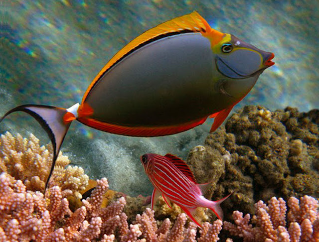 a very personable pet aquarium fish.