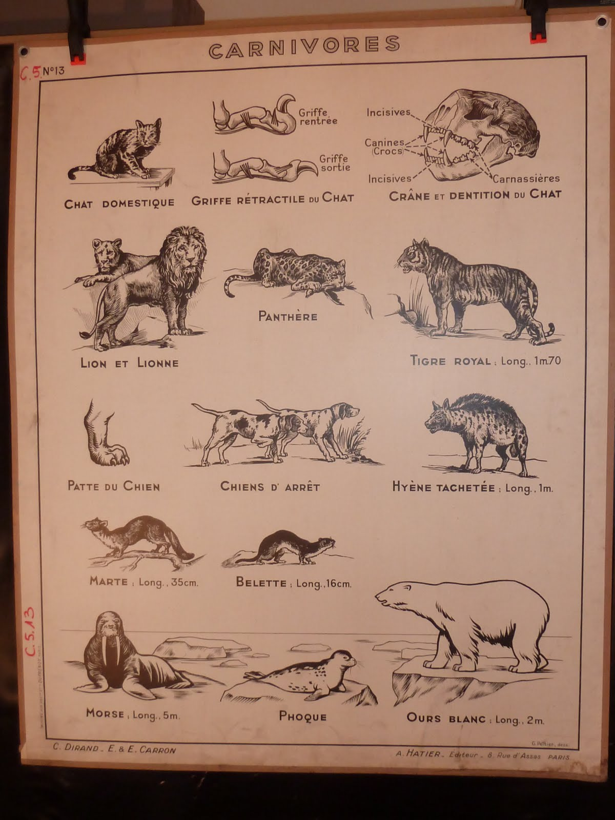 Vintage French Posters Botany Animals Anatomy Old World