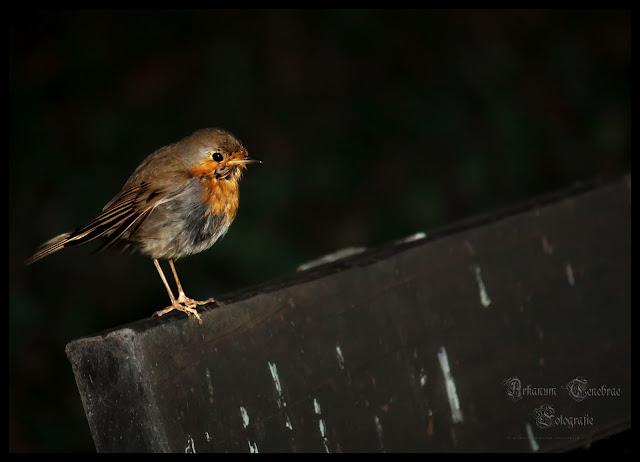 ein kleiner Singvogel auf einer Parkbank