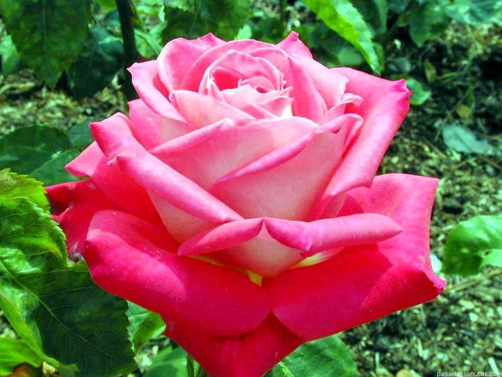 Rima blog eu te dou uma flor p 39 ra voc com carinho for Vendo plantas ornamentales