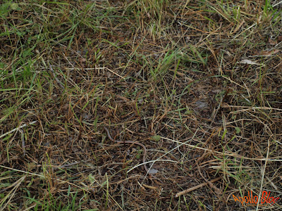 Sarpe in iarba