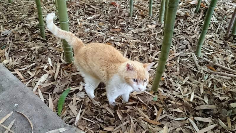 Callejeando por valencia gatos del jard n bot nico de for Alejar gatos del jardin
