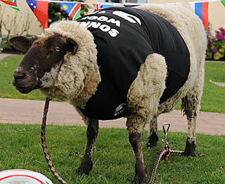 sonny wool domba