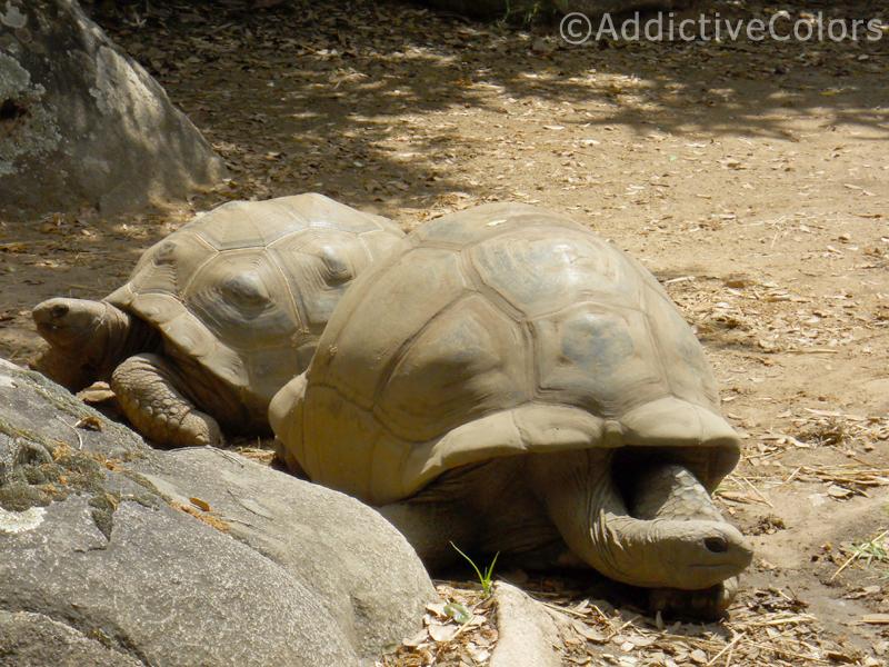 La vita puzza a capulatta for Vasche per tartarughe marine