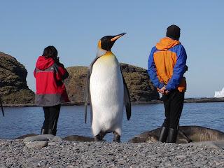Pingüinos: abril 2013