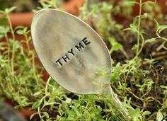 thym-miel-propolis-vitamine c