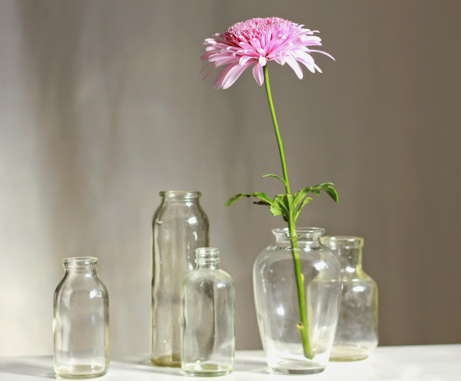 still life, flower, pink, glass jars, simplicity