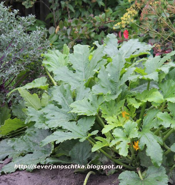 уплотненные посадки овощей и трав
