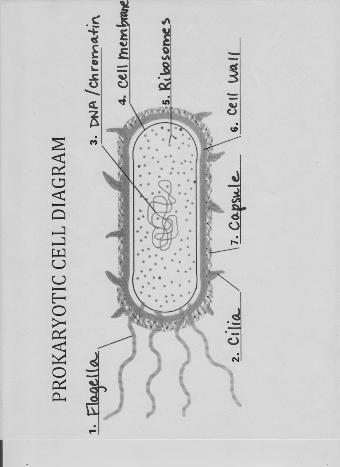 Biology With Coach T November 2013 Collection Prokaryotic Cell Diagram Labels Pictures Diagrams Related You Must Know