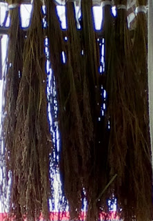 稲の乾燥 ミニかめ