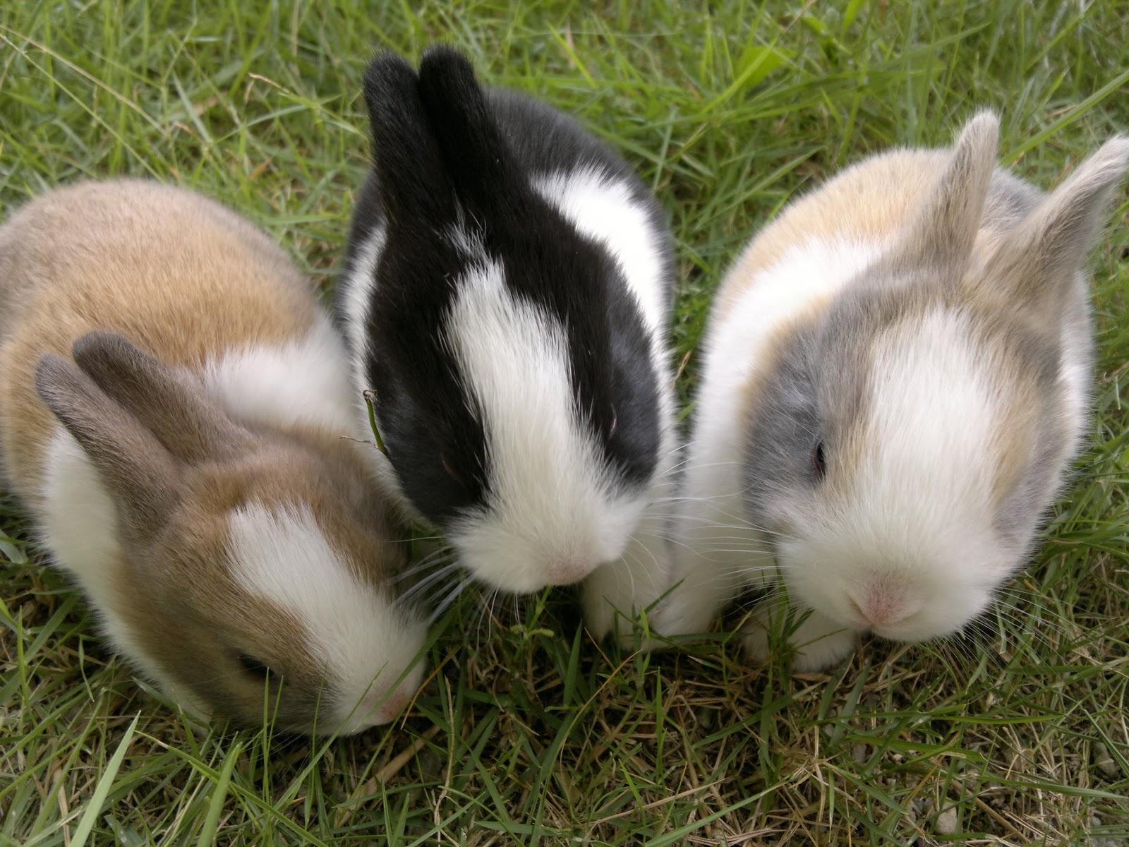 Tropical Park Rabbitry Kenapa Arnab