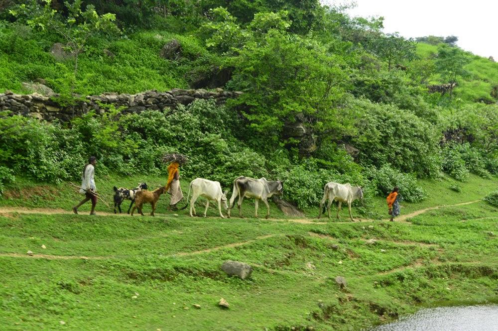 aravalli hills viallager