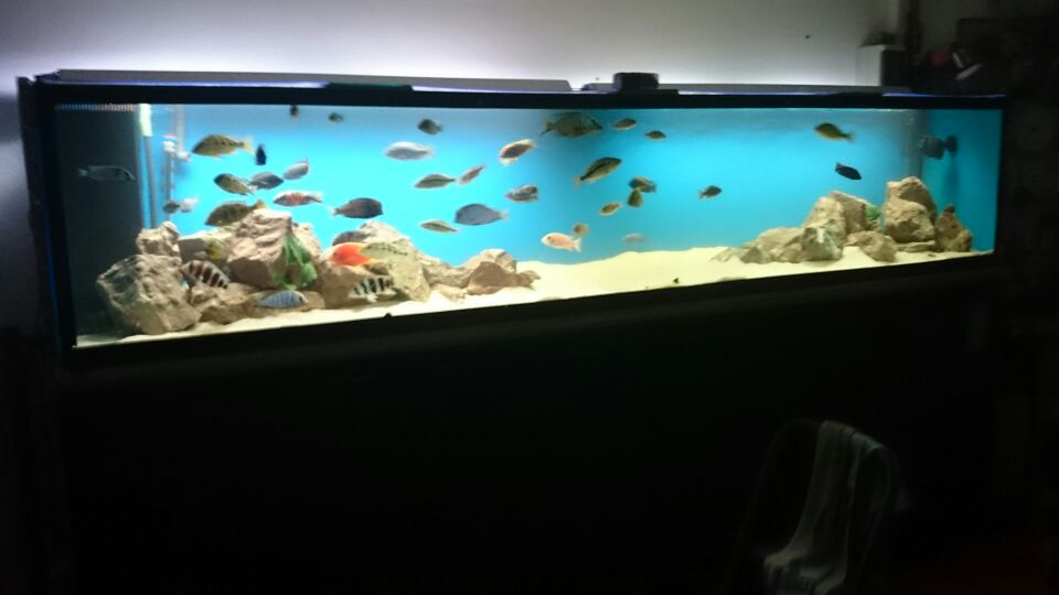 acuario a medida acuario de litros