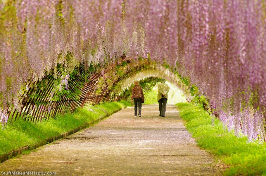 Wisteria Tunnel, Japan (Photo by Binarycse)
