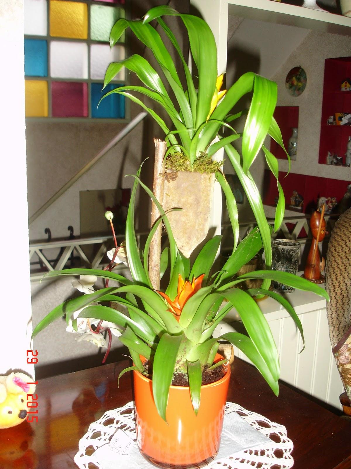 Suite de au fil des jours pour oublier le mauvais temps for Arrosage plante interieur