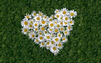 Love and flowers puzzle