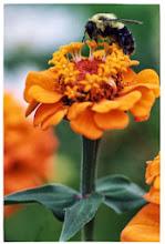 bourdon et fleur