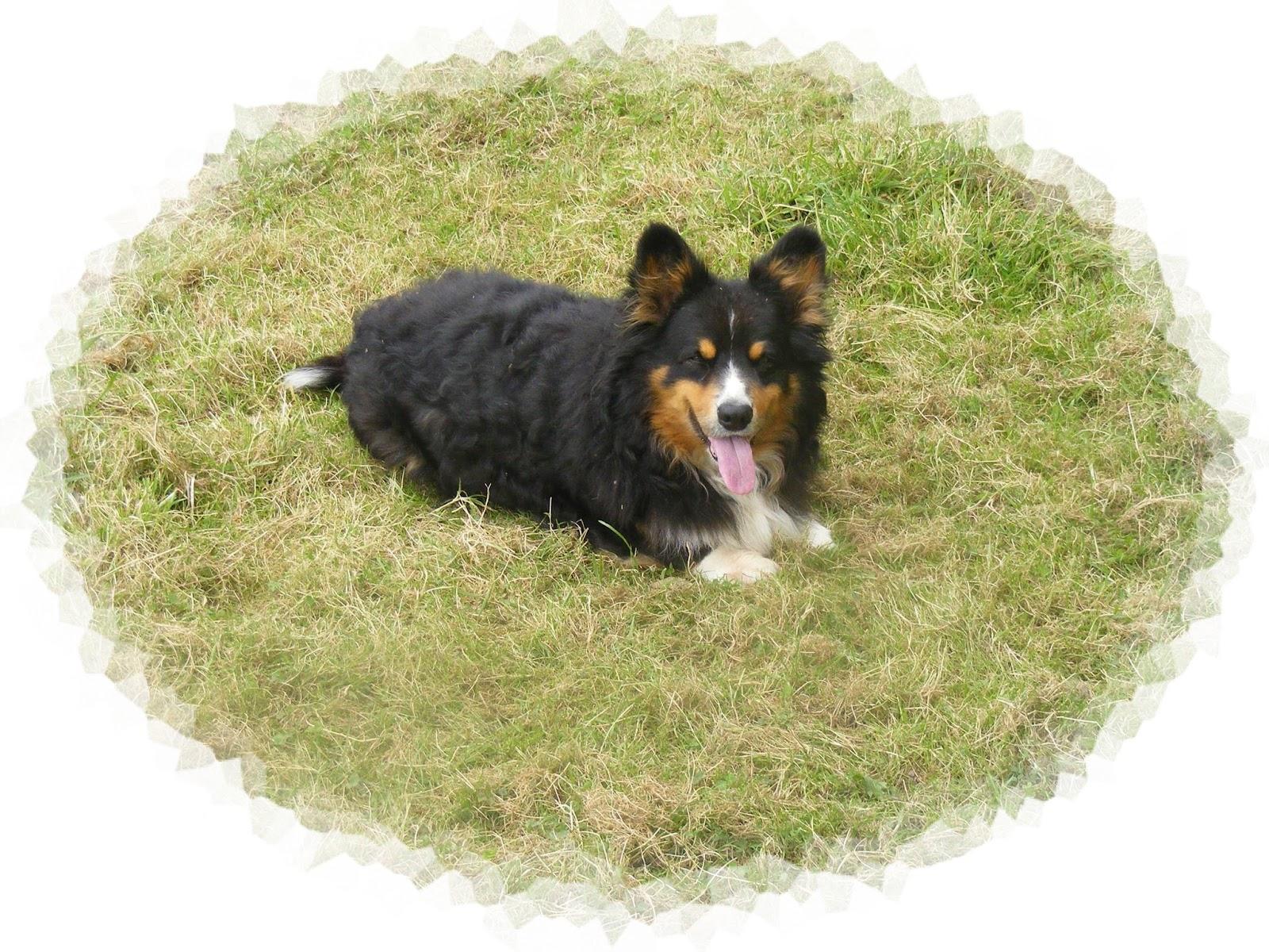 Dog Boarding Huntsville Ontario