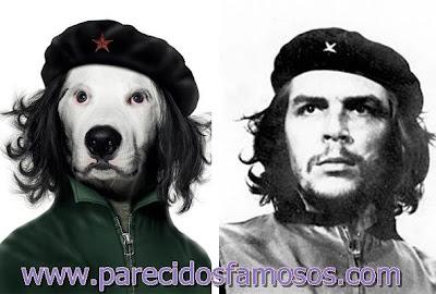 Perro con Che Guevara
