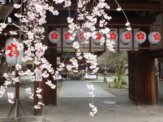 北区平野神社は昔より「平野の夜桜」として有名である。