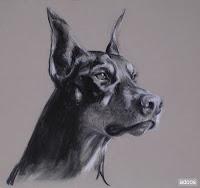 raza de canes doberman
