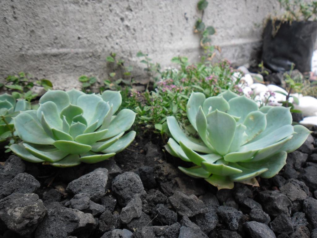 Flores Mexicanas \