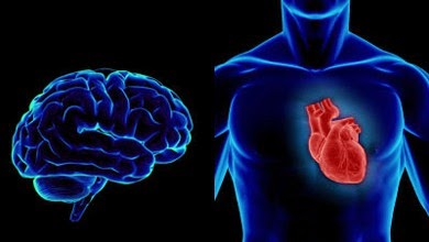 دراسة  فرنسية :  سلامة القلب و الشرايين افضل وقاية من شيخوخة العقل