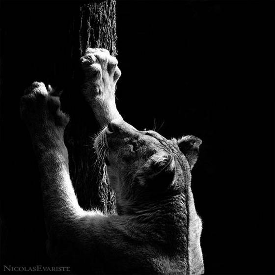black and white pictures of animals. Animals in Black and White
