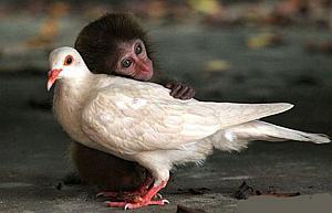 Imágenes Graciosas de Animales, Monos