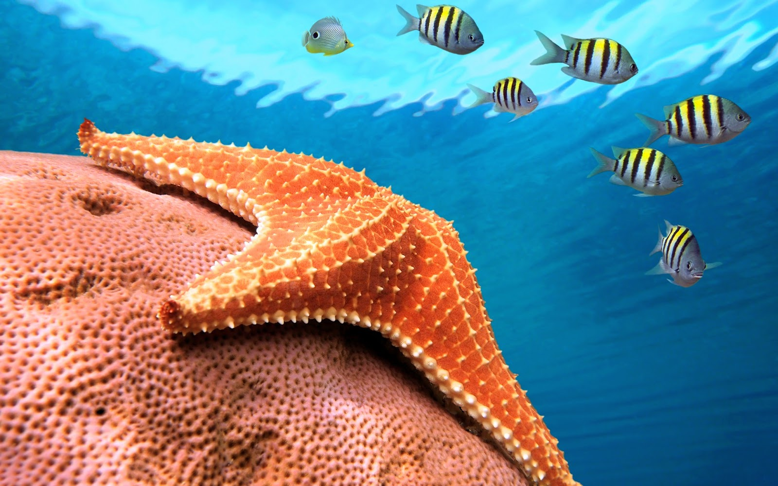 Starfish Wallpapers Hd Beautiful Wallpapers Collection 2018 HD Wallpapers Download Free Images Wallpaper [1000image.com]