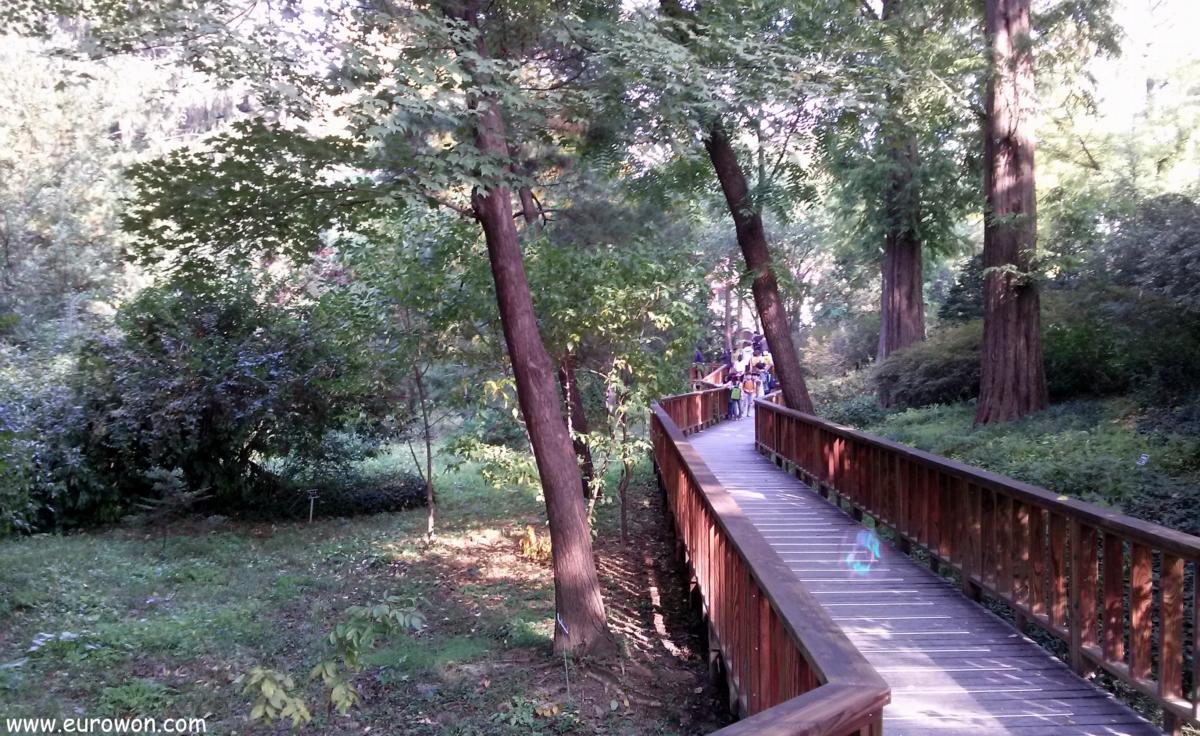 Pasarela en el arboreto de Seúl