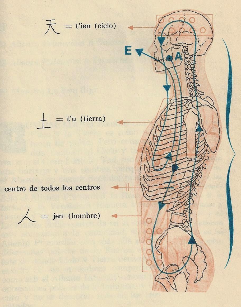 Respiración Embrionaria