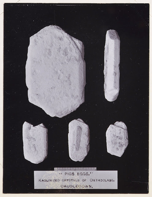 'Pigs Ears' Kaolinized Crystals of Orthoclase. Caudledown. Geologists' Association North Cornwall Field Excursion April 16th 1914.