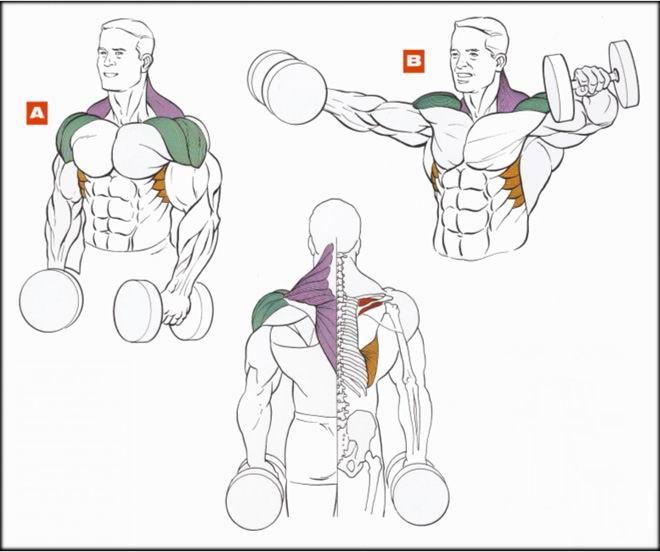 Как увеличить плечи а домашних условиях