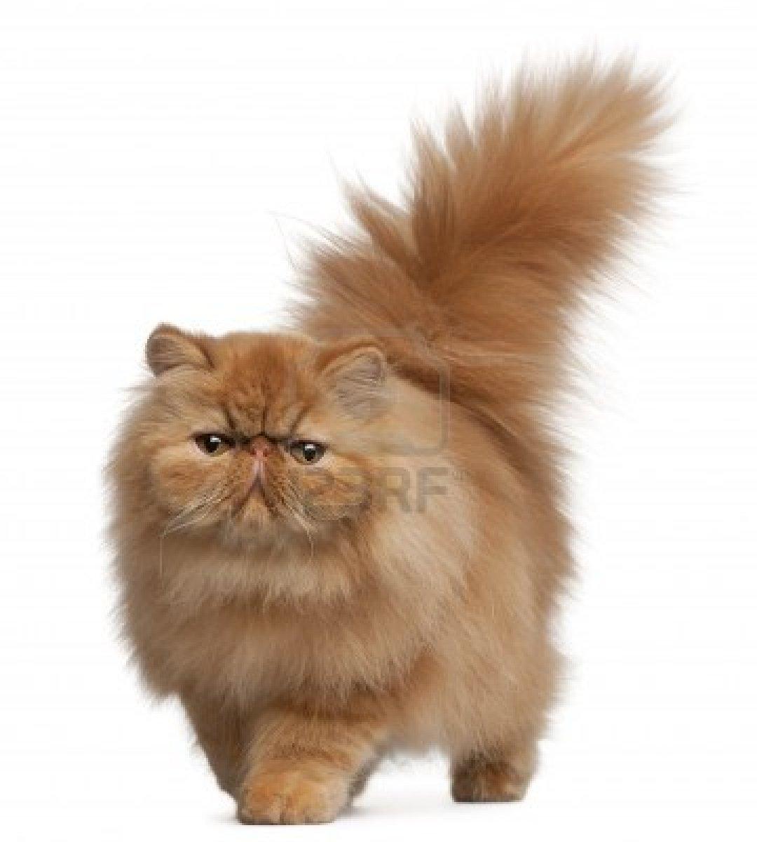 Mengenal Kucing Epoy Cat S Breeder