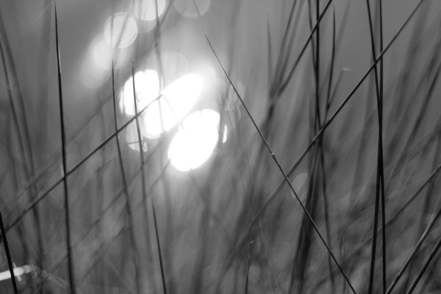 http://1.bp.blogspot.com/-gQF2diokhFI/UEpyVKswoSI/AAAAAAAABRg/QLOT0C4HJS8/s1600/herbes+floues.jpg