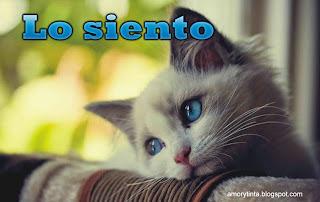 gatito triste lo siento