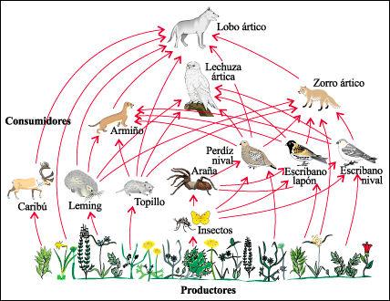ecosistema polo wikipedia:
