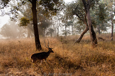 Morning in Bandavghar National Park, India