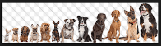 Select the Right Dog Breeds
